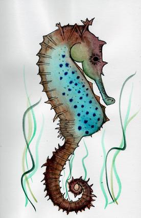 Seahorse-web