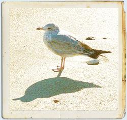 Nina Seagull