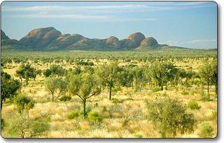 outback bushland