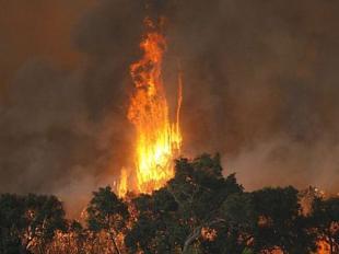 Bushfire kinglake
